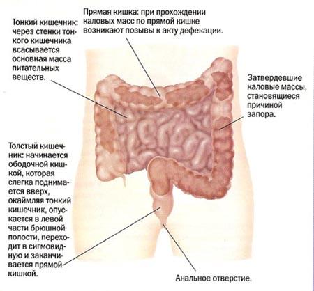 Чем лечить кишечник беременным