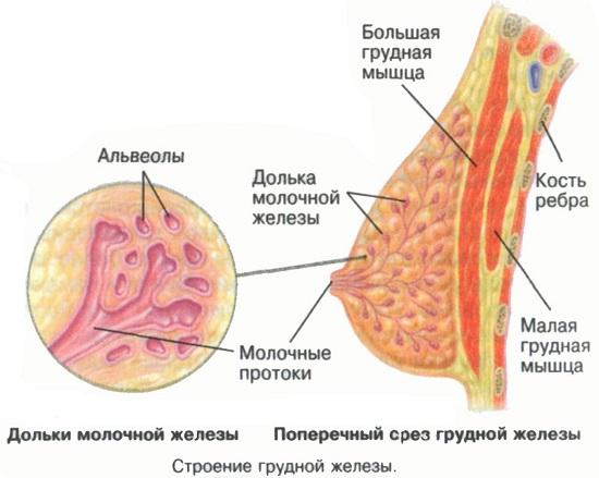 lekarstva-pri-bolyah-v-pecheni-i-zhelchnom-puzire